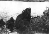 Савецкая пяхота на беразе Дняпра. 1944 г. Фотаздымак  з сайта  https://news.tut.by