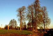 Парк «Ліпкі» г. Дуброўна. Фотаздымак з сайта http://www.dubrovno.by