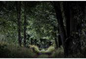Ліпавая алея на тэрыторыі сядзібы Мілашаў. Фотаздымак з http://charea.spravafestival.by