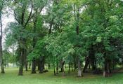 Парк сядзібы фон Рэнтэльнаў. Сенненскі раён, аг. Ходцы. Фотаздымак з сайта http://www.fotobel.by