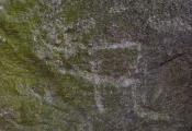 Дуб-волат ля в. Каменнае Крывое. Фотаздымак з сайта http://www.natal.by