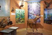 Зала прыроды УК «Талачынскі гісторыка-краязнаўчы музей». Фотаздымак з сайта http://www.fotobel.by