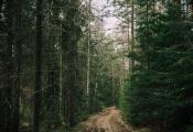 Ландшафтны заказнік «Асвейскі». Верхнядзвінскі раён. Фотаздымак з сайта http://bahna.land