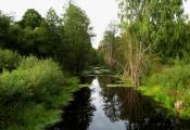 Бярэзінскі біясферны запаведнік, Лепельскі раён. Фатаграфія з сайта http://bahna.land