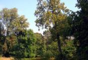 Сар'янскі парк, аг. Сар'я. Верхнядзвінскі раён. Фотаздымак з сайта https://radzima.org